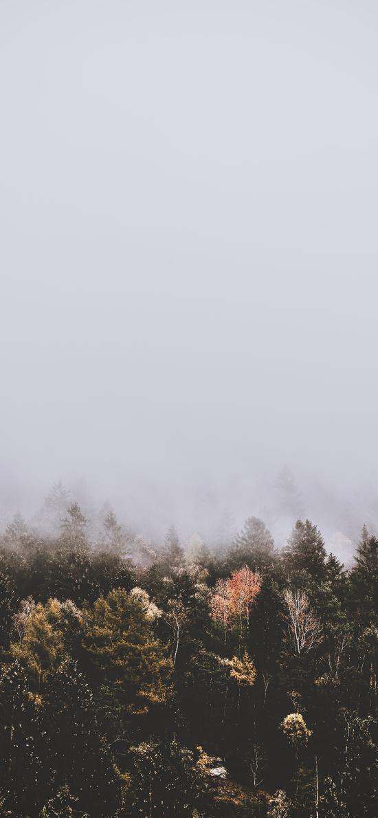 森林 树林 树木 烟雾