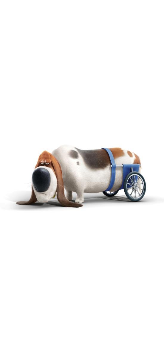 爱宠大机密2 电影 动画 狗