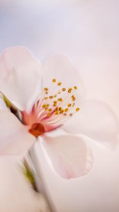 鲜花 盛开 花蕊 花朵