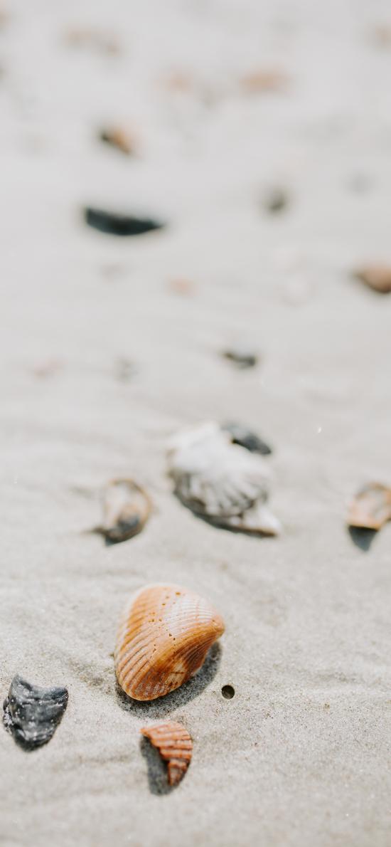 贝壳 沙滩 海岸 海边