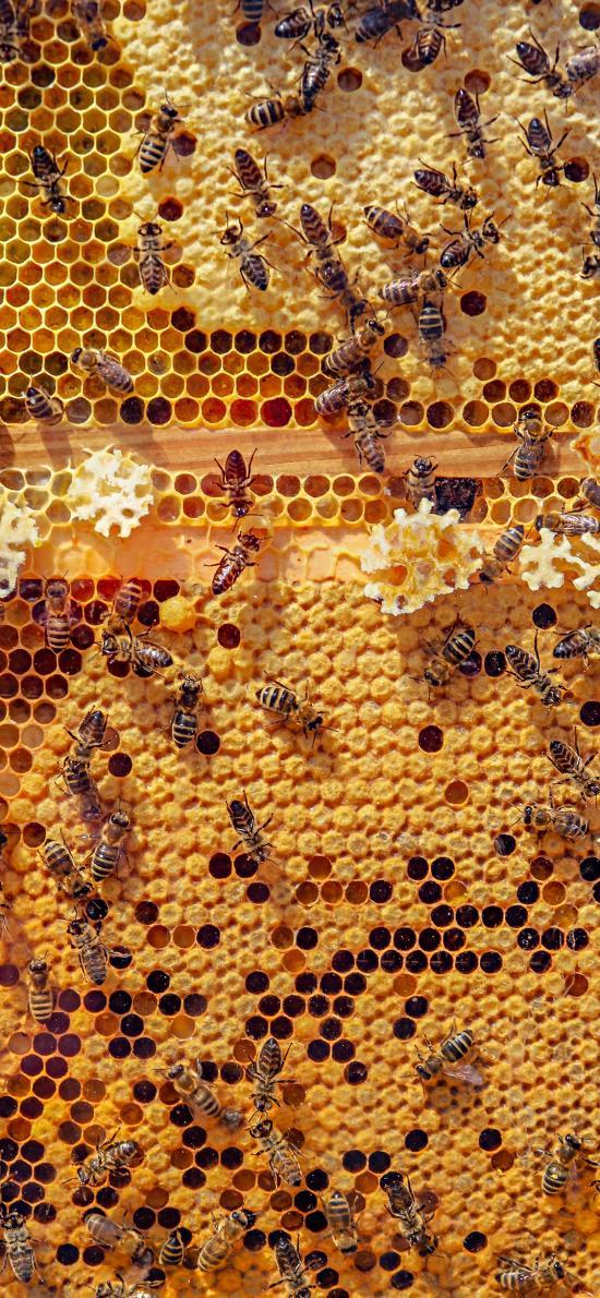 蜜蜂 蜂巢 黄色 采蜜 昆虫