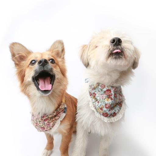 狗 犬 汪星人 宠物 可爱