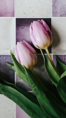 鲜花 郁金香 花朵 瓷砖