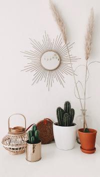 家居 静物 仙人球 盆栽 挂饰