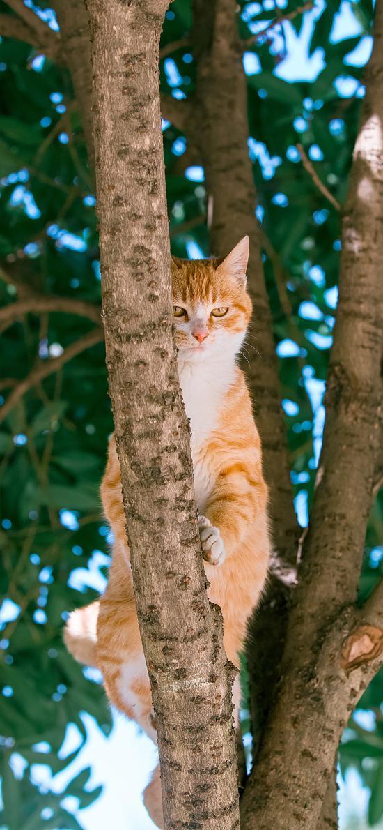 橘猫 肥猫 上树 眼神