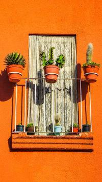 盆栽 仙人掌 窗台 墙壁 橙色