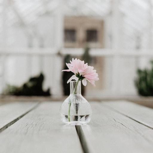 鲜花 花瓶 花朵 木板