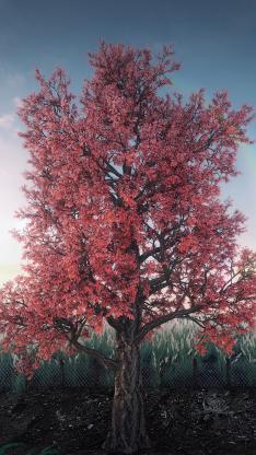 树木 枝干 红叶 大树