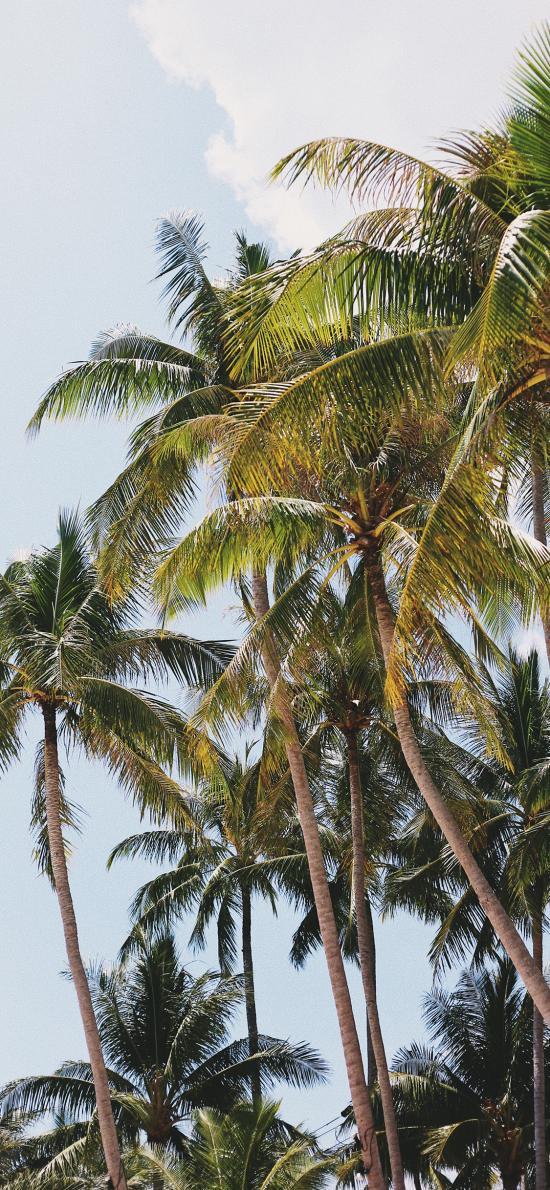 椰树 海岸 热带  树林