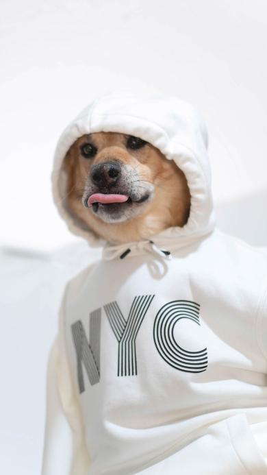 狗 衣服 吐舌 犬 汪星人 宠物