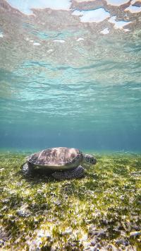 海龟 海草 大海 波光粼粼