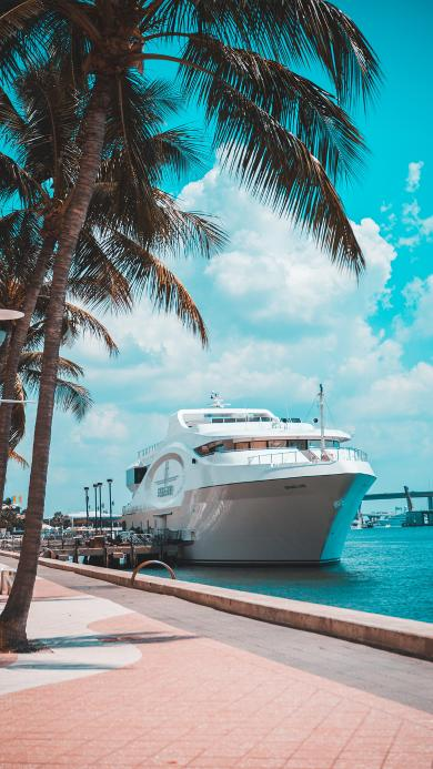 蔚蓝 椰树 游轮 轮船