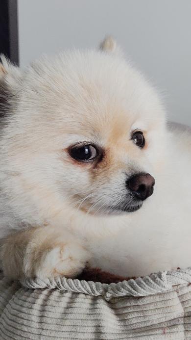狗 犬 汪星人 宠物 可爱 萌