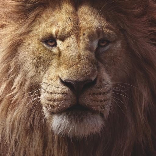 狮子王 电影 欧美 剧照 森林之王