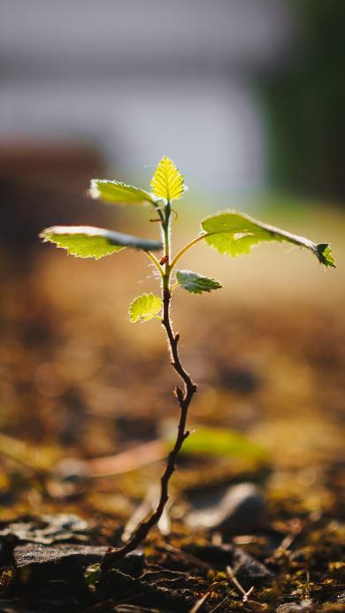 綠植 發芽 破土 嫩葉