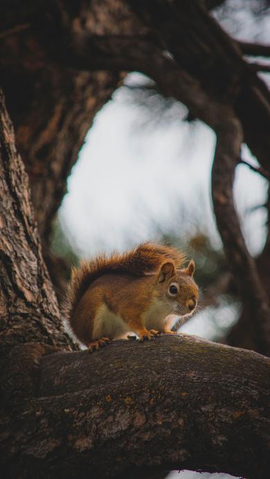 树干 松鼠 可爱 趴着