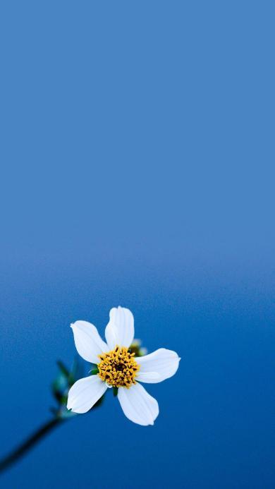 鮮花 盛開 花瓣 花蕊