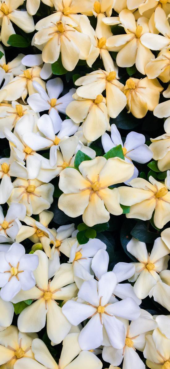 鲜花 花朵 密集 平铺 盛开 花季