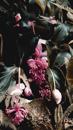 植株 鲜花 粉色 一簇 蕨类植物