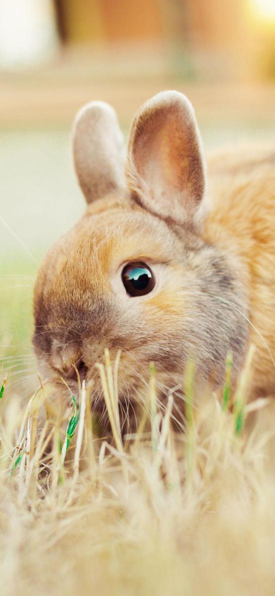 兔子 草坪 宠物 可爱