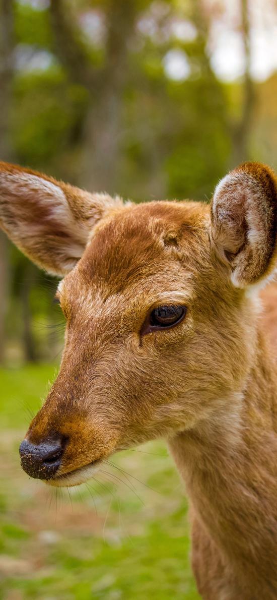 鹿 皮毛 野外 頭部