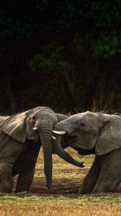 郊外 大象 小象 象牙