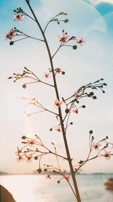 藍天 鮮花 小花 清新