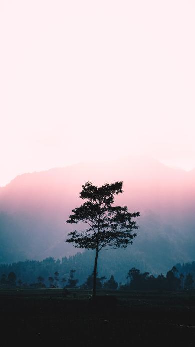 树木 天空 渐变 一枝独秀