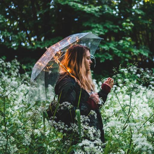 花丛 花季 雨伞 野外