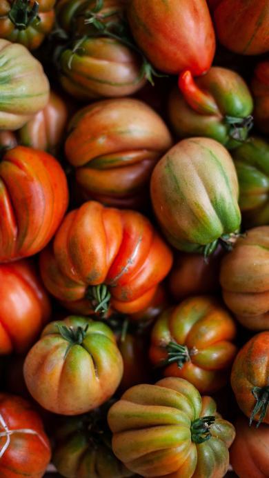 食材 蔬菜 番茄 品种 畸形