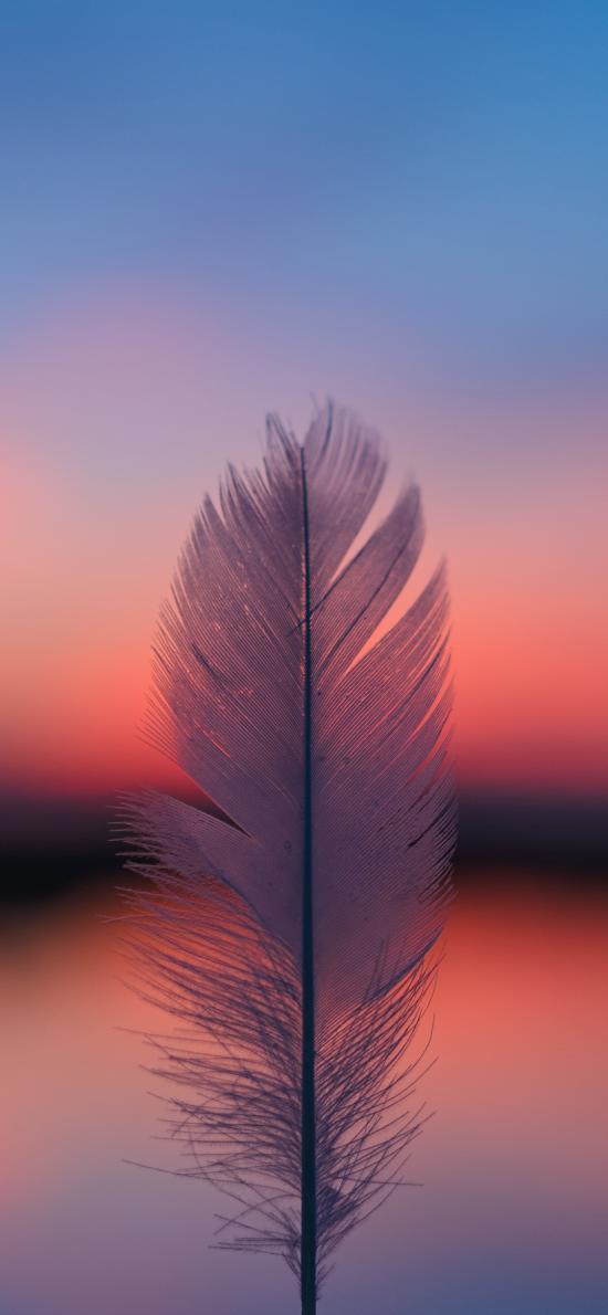 羽毛 羽绒 静物 特写