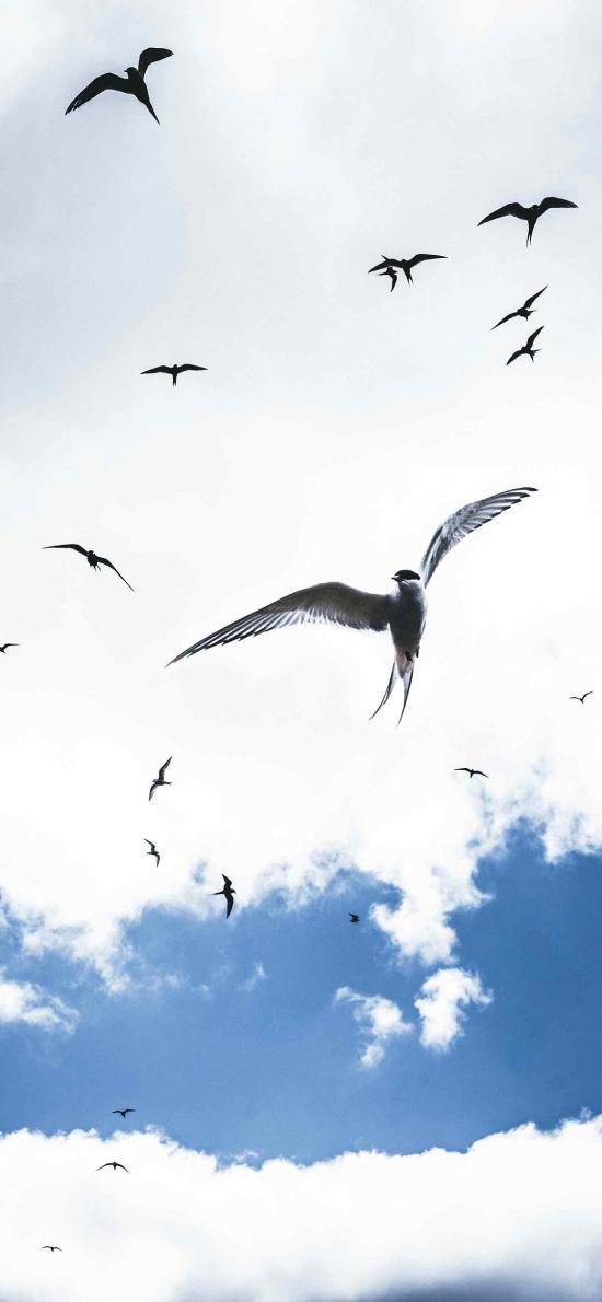 飛鳥 鳥類 鳥群 白云