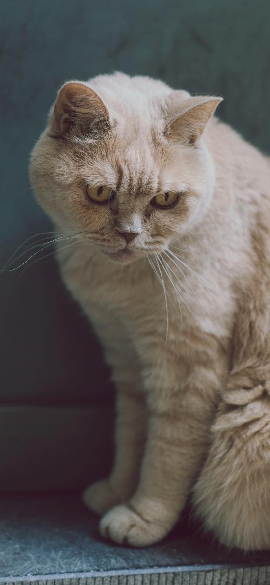 宠物 猫咪 喵星人 白色
