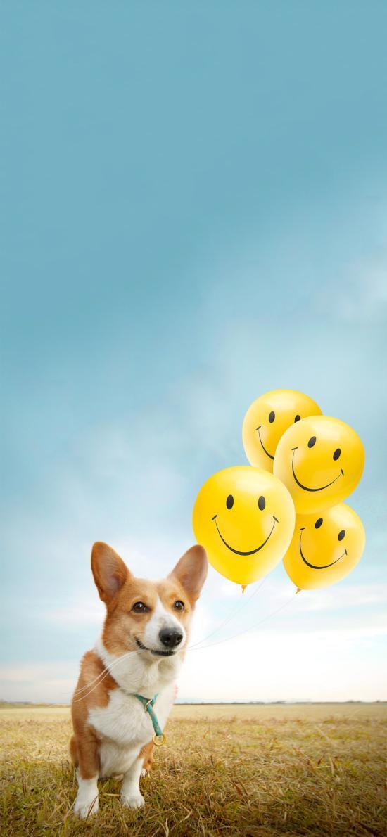 草地 柯基犬 宠物狗 气球