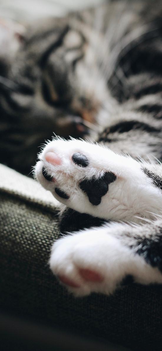 猫咪 宠物 猫爪 肉掌