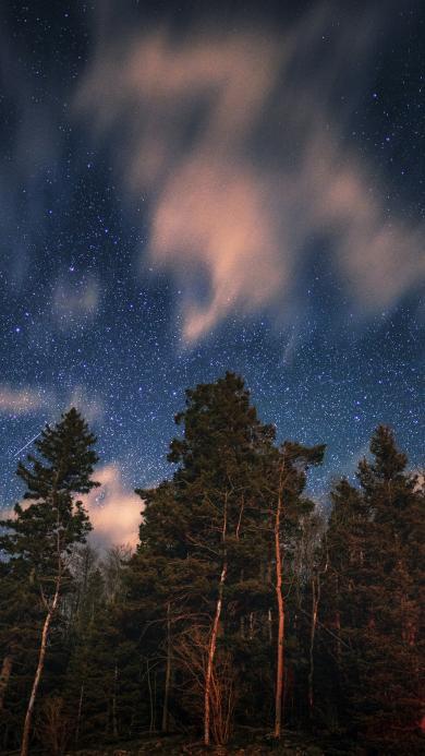 星空 云朵 树木 夜景 唯美