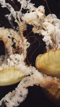水母 浮游 海洋生物