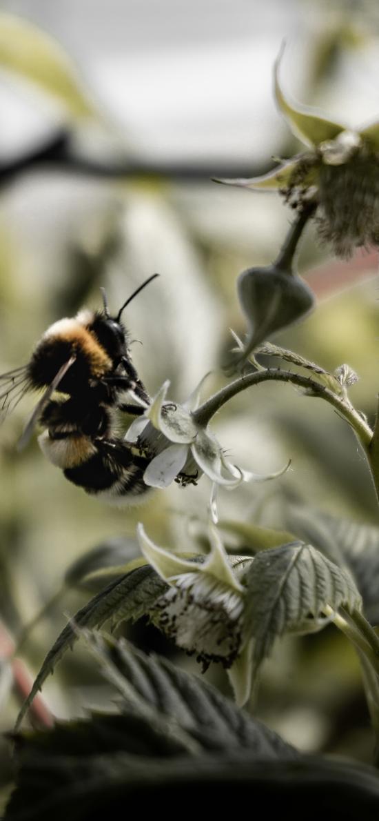 昆虫 蜜蜂 采蜜 飞行