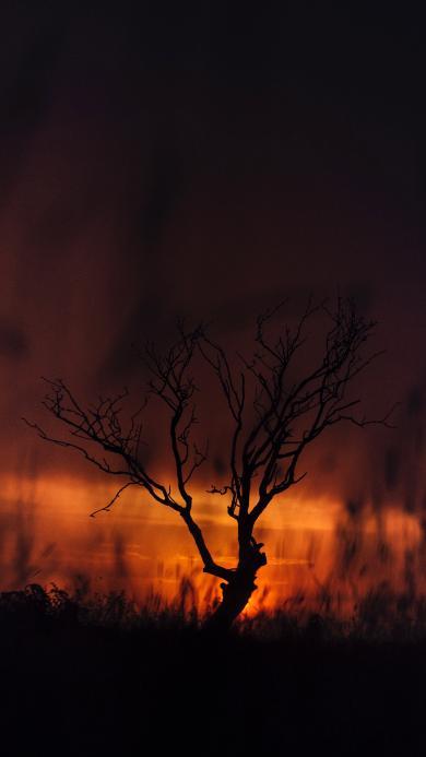 树木 枯枝 夕阳 晚霞