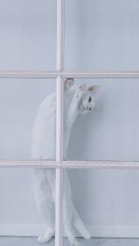 猫咪 白 宠物 钢架