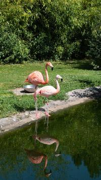 火烈鸟 河岸 水边 鸟类