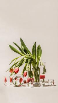 鲜花 郁金香 水杯 玻璃杯 反射