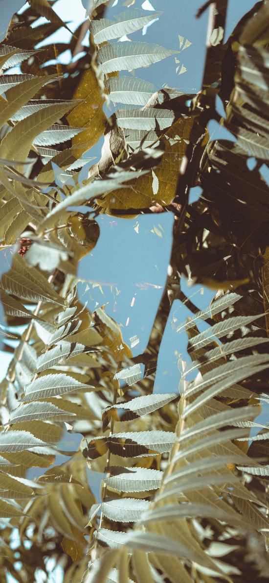 树木 枝叶 繁茂 阳光