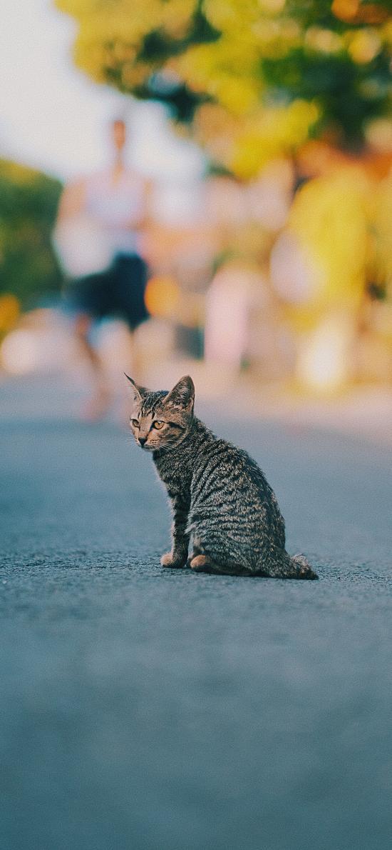 街道 喵星人 花貓 貓咪