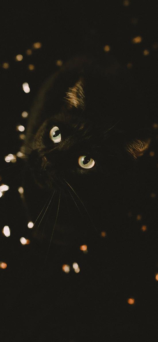 猫咪 宠物 黑猫 瞳孔