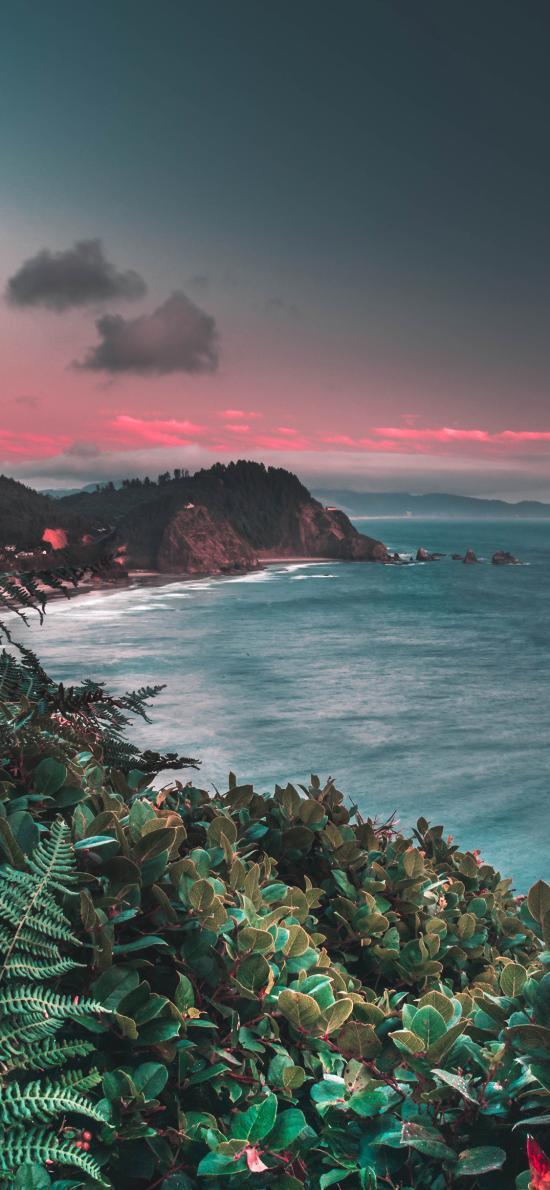 大海 山峰 植株 自然 海景