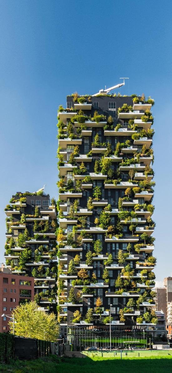 建筑 高楼 树木 绿化