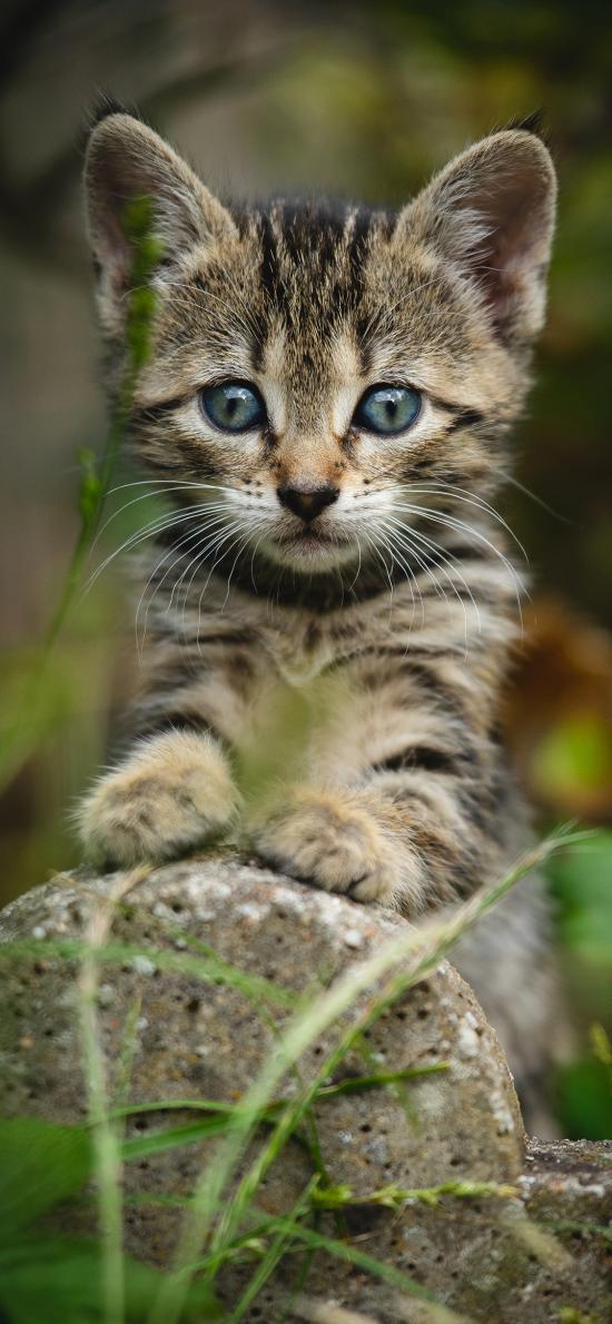 貓咪 野外 石塊 幼仔