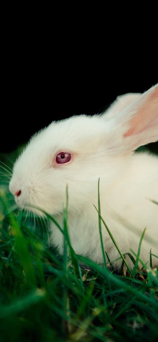 兔子 草地 白兔 飼養