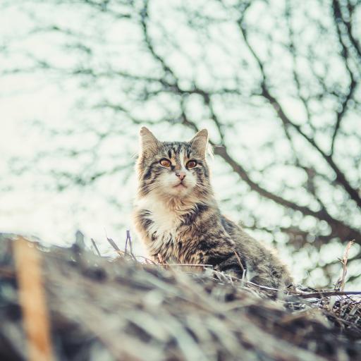 猫咪 宠物 屋檐 户外